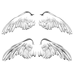 Wings sketch collection cartoon vector illustration