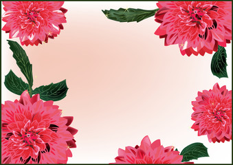 red georgina flowers frame on light background