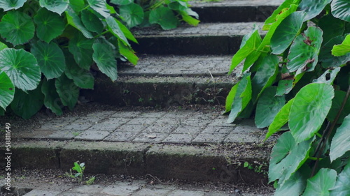 Rustic Steps With Green Plants Dolly