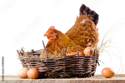 Foto op Canvas Kip Chicken in nest with eggs isolated on white