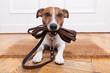 Leinwanddruck Bild - dog leather leash