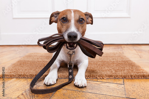 Foto Spatwand Hond dog leather leash
