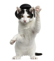 European Shorthair kitten wearing a top hat, on hind legs