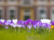 crocus in front of a historical building