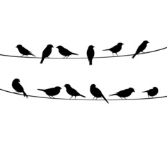vector bird silhouettes sitting on wire