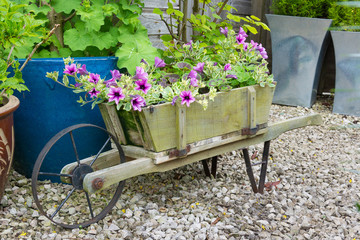 Trailing surfina petunias in a wooden wheelbarrow.