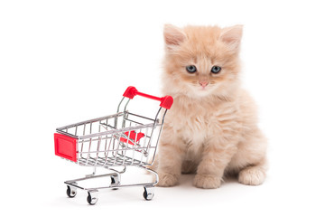 Kitten with shopping cart
