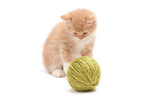 Kitten playing with green clew