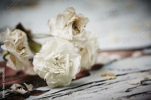Small White Flower © Sean Nel