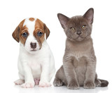 Puppy and kitten on white - 58835697