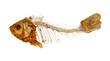 Skeleton of fish - 58837225