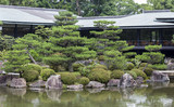 Fragment of a Japanese garden with artificially shaped pine tree