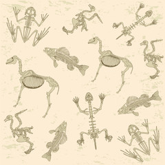 animals anatomy, skeleton  archeology biology  pattern