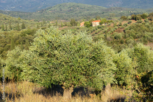 Greece, rural landscape