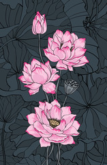 Pink lotus on dark background