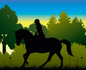 dressage in the morning - silhouette