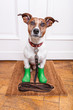 dog rubber rain boots