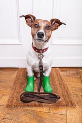 dog rubber rain boots