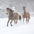 Batch of horses running in winter