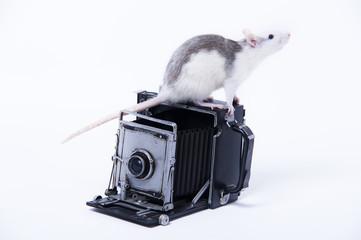 Cámara con rata