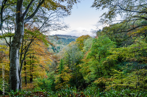 Allen Banks view over wooded valley