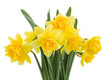 bouquet of daffodils close up