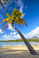 Beautiful palm on beach in Mauritius Island
