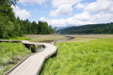 Wooden path in swamp during low tide