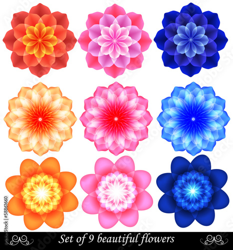 Set of 9 beautiful colored flowers