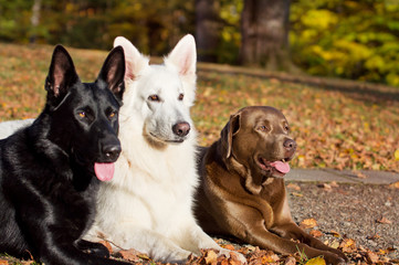 Three Dogs in the Autumn Sun