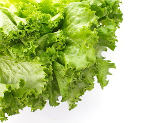 Fresh Lettuce isolated on white background   close-up