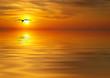 en busca de la puesta de sol