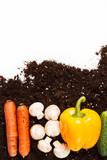 vegetables on the soil