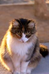 Katze sitzend