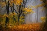 Bajkowy las we mgle, jesienny krajobraz
