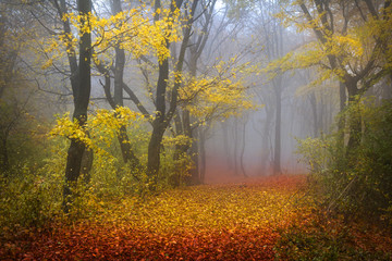 Fairytale foggy forest for child and fantasy books