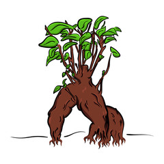 vector cartoon bonsai