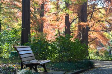 秋の公園tベンチ