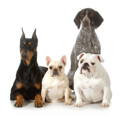 four different purebred dogs