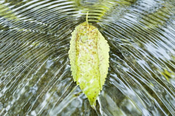 Leaf on flowing water