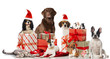 canvas print picture - Tierische Weihnachten