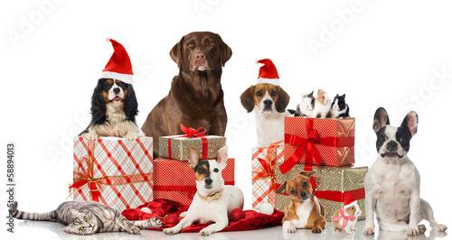 canvas print picture Tierische Weihnachten