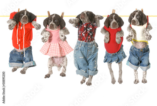 puppies on a clothesline