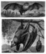 2 Various Bats - Chauves-Souris - Fledermaus