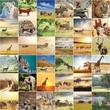 Fototapete Afrika - Wildlife - Säugetiere