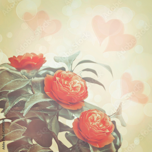 Bouquet of a camellia of flowers on an blurred background with h