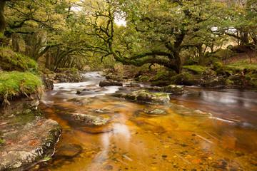 River Plym Dewerstone woods Dartmoor Devon Uk
