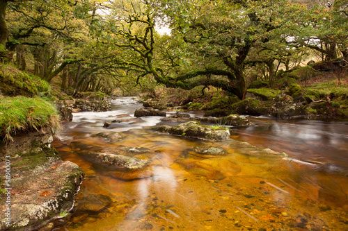 River Plym Dewerstone woods Dartmoor Devon Uk