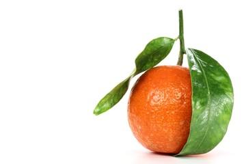 Clementine07