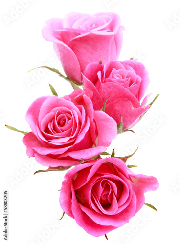 Poster Roses Pink rose flower bouquet isolated on white background cutout